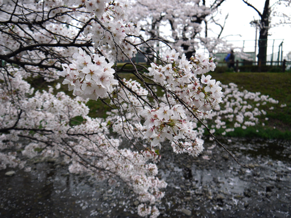 120410_hanami3.jpg