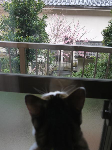 120411_yaezakura2.jpg