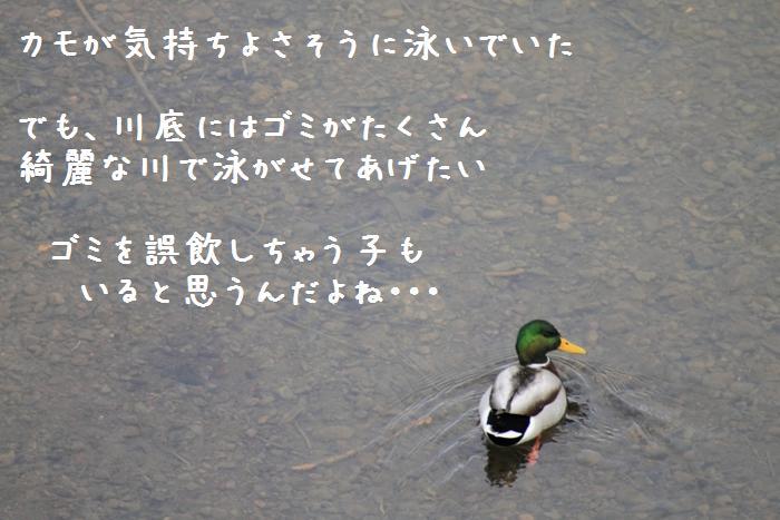 20110206-002-1.jpg