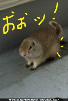 $りく-IMG_0173.jpg