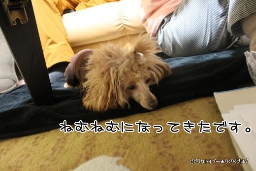 04-IMG_0459.jpg