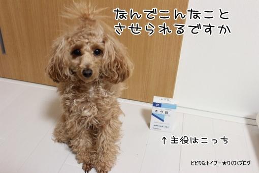 1-IMG_0045.jpg