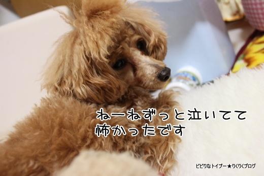 2-IMG_9146.jpg