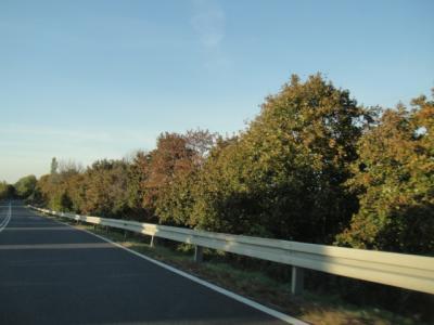 10.2011 秋の紅葉