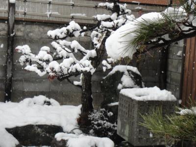 12 2011 初雪
