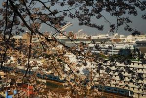 桜と京浜東北Ⅱ