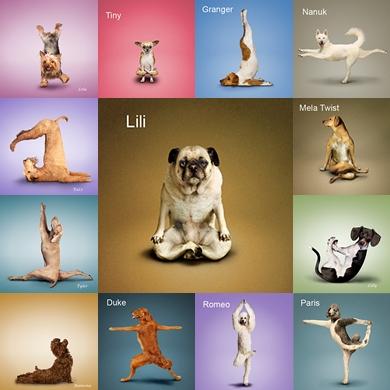 Dog Yoga