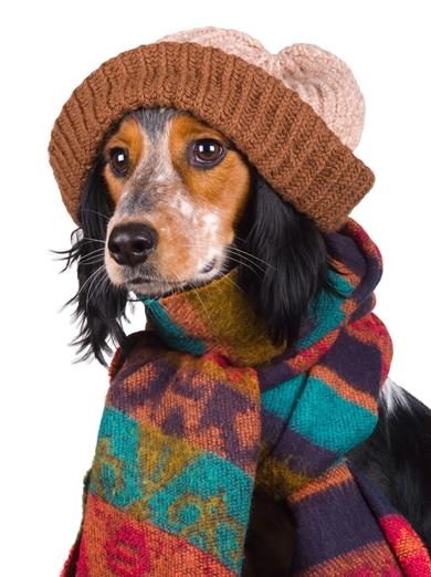 冬使用でございます。
