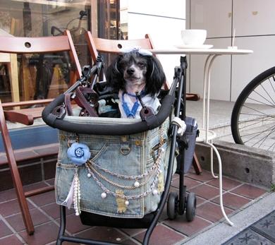 近所のカフェでマッタリな時も、ペットカートは便利!