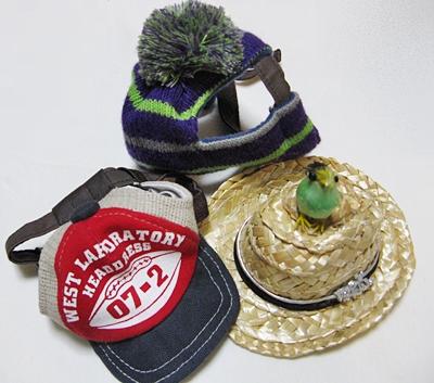 龍馬の帽子たち