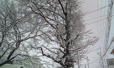 DVC00228_20120229120424.jpg