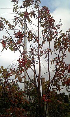 DVC00260_20111115200512.jpg