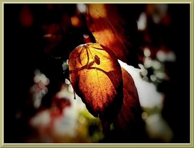 ○16GOLDグラ細い薄い木枠