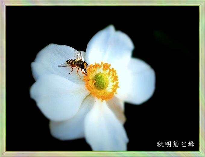 蜂と秋明菊○56草色細い