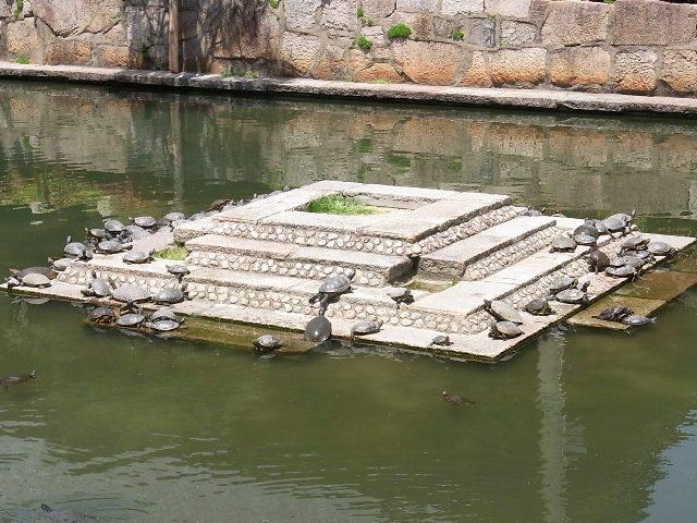 GW_20120428-四天王寺-亀之池