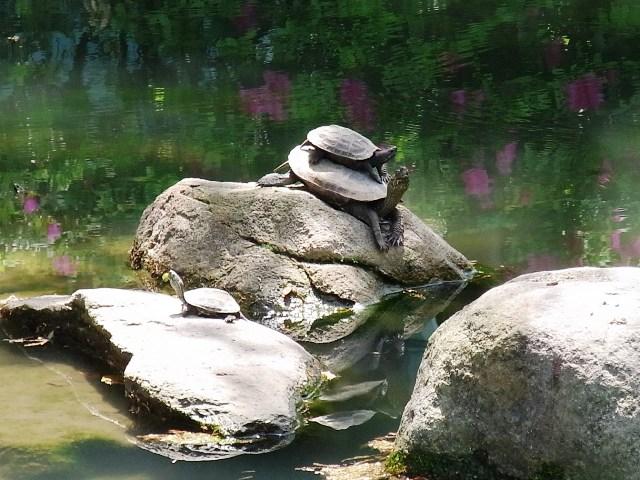 GW_20120428-四天王寺本坊庭園-極楽の池