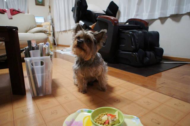 もう食べてもいいの?
