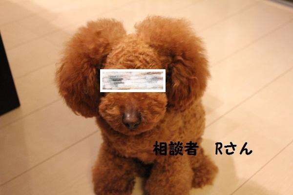 a1_20110301192059.jpg