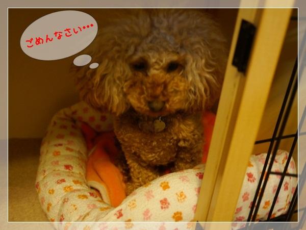 b1_20120322000727.jpg