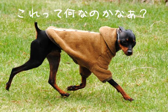 DSC_0041_20110601162134.jpg
