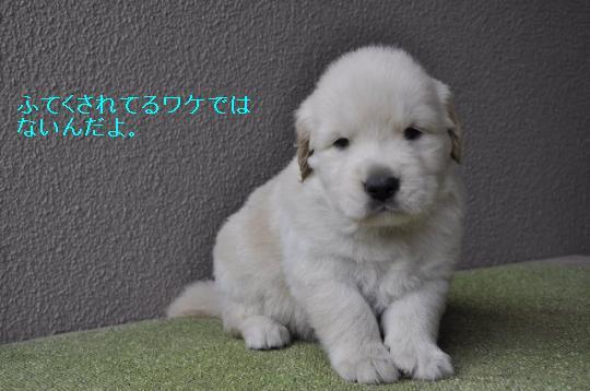171_convert_20100923222413.jpg