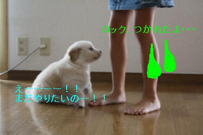 IMG_4615_convert_20100824132343.jpg