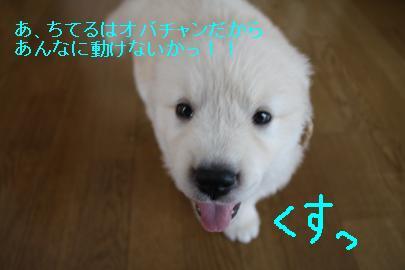 IMG_4625_convert_20100825153746.jpg