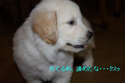 IMG_4842_convert_20100826155108.jpg