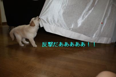 IMG_4890_convert_20100830124708.jpg