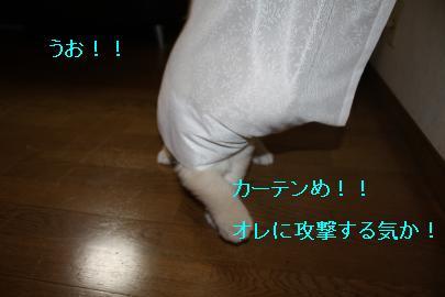 IMG_4896_convert_20100830124949.jpg