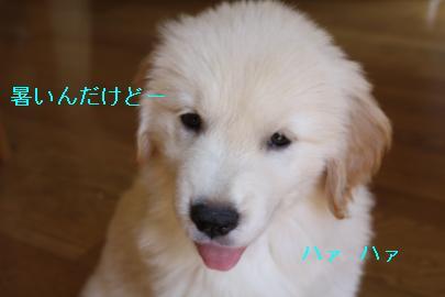 IMG_5031_convert_20100903162505.jpg