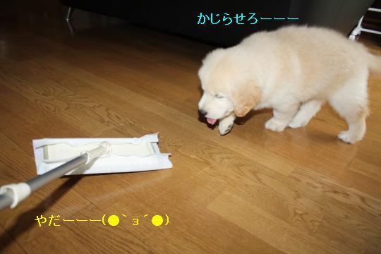 IMG_5361_convert_20100909150633.jpg