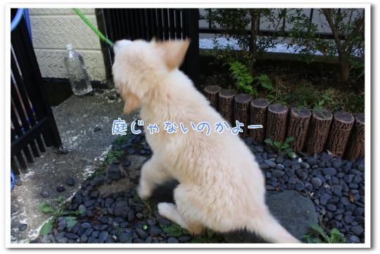 I_dv1.jpg