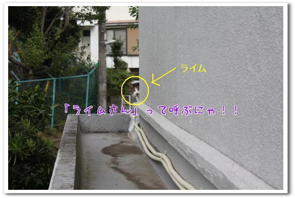 YY1hX.jpg