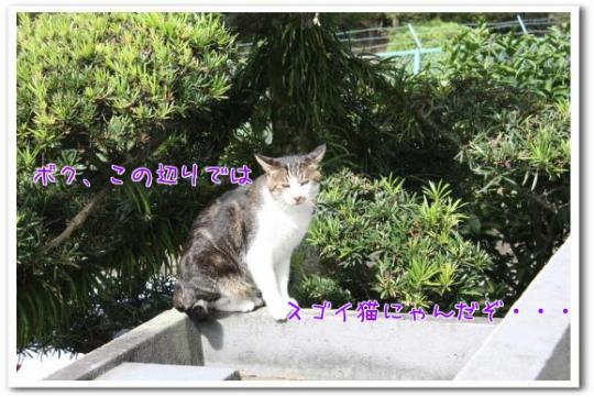 h_tlh_convert_20101003171505.jpg