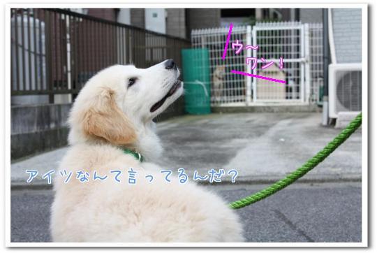kBWip.jpg