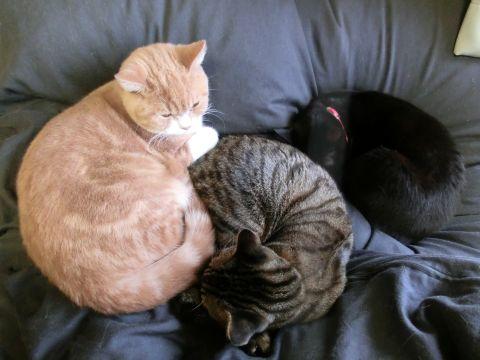cat0001.jpg