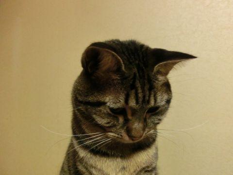cat0037.jpg