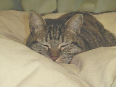 cat0038.jpg