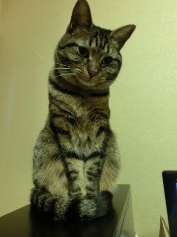 cat0039.jpg