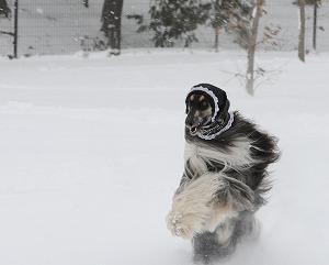 雪遊びじゃー