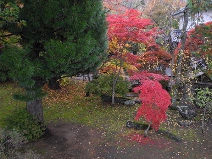 8懐古園の紅葉