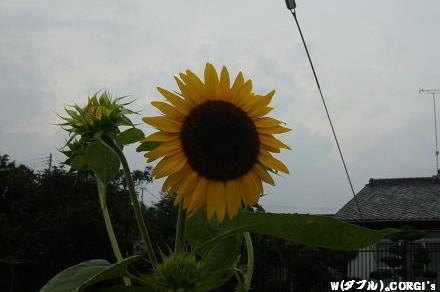 2010071708.jpg