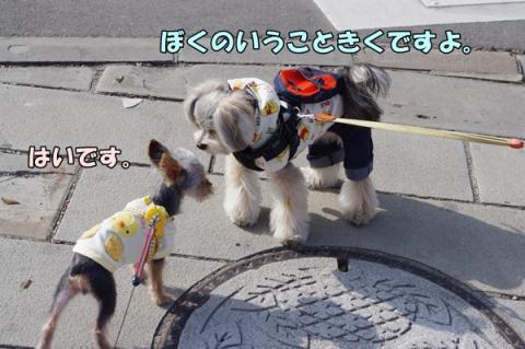 散歩指導①