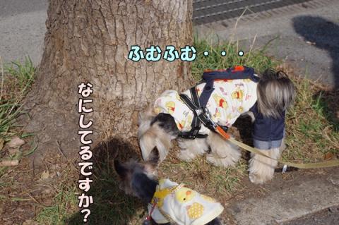 散歩指導②