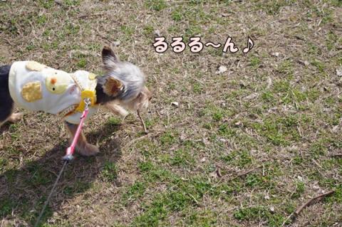 散歩指導⑤