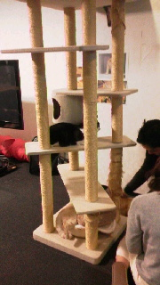 cat2.jpg