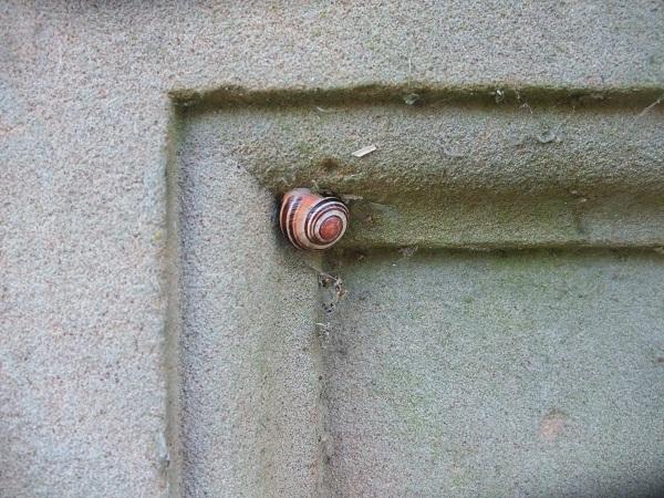 snail121210.jpg