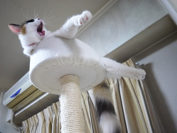 飛ぶ練習おーわーりーーー