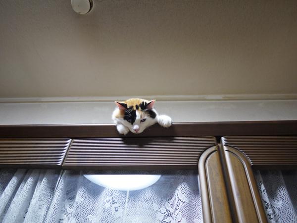 見下ろし猫①